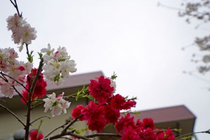 2015-04-04_13.17.46_SONY_ILCE-7S_ISO100_F5.0_1/1000sec