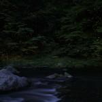 ホタルの撮影設定と明暗合成方法