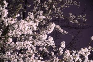2016-03-31_21.18.30 SONY_ILCE-7S_ISO800_AvF6.3_Tv2s_157mm_S