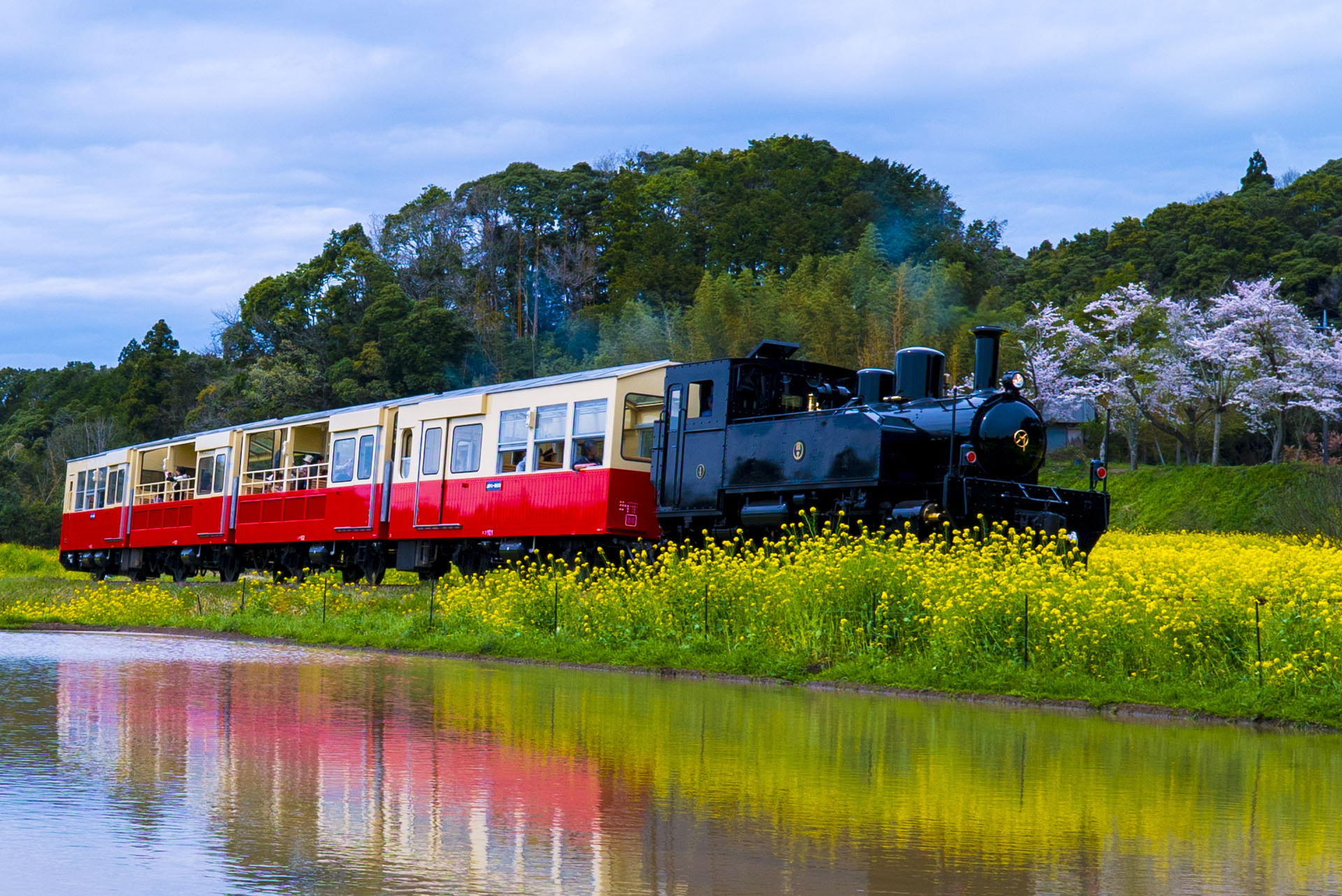 小湊鐵道の菜の花と桜