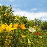 2016-06-10_11.18.01 SONY_ILCE-7S_ISO100_AvF14.0_Tv160_35mm_Landscape
