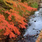 所沢の紅葉をiPhone XS Maxで撮影した写真