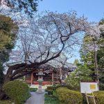小平の泉蔵院の桜〈2021〉